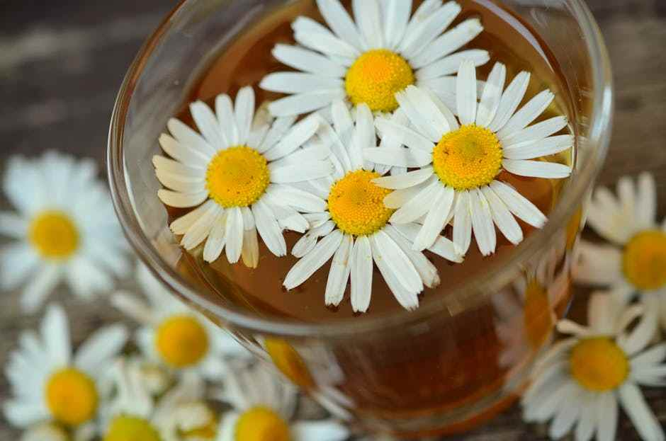 chamomile tea - Did You Know These 8 Benefits of Having Tea?
